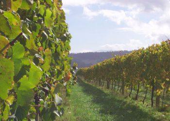 Solitude Estate Yarra Valley Vines and Clouds