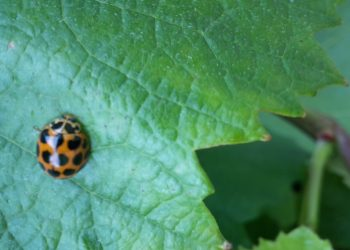 ladybird-3